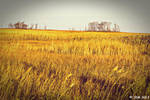Field of Gold by JDM4CHRIST