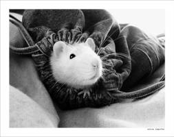 a literary rat. by gizmocrat