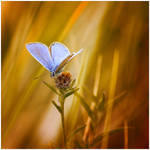 Little Creatures 044 by Frank-Beer