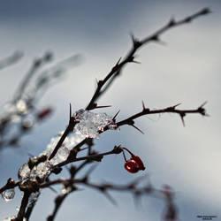 Winter Wonderland 014 by Frank-Beer