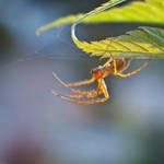 Little Creatures 104 by Frank-Beer