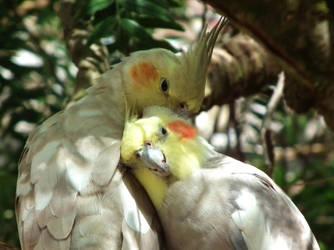 A Parrot Pair by insolitus-mundus