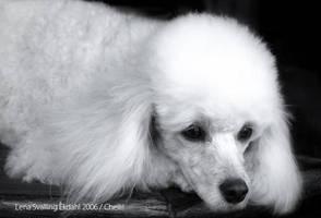 Poodle by Lena-Lou