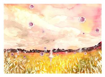 Cornflowers by Toffi-Fee