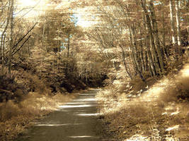 path by Swingerzetta