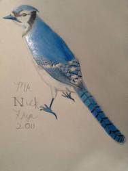 Blue Jay by MrN22