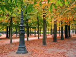 Jardin des Tuileries by kuntaldaftary