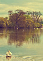 swan lake by warbzz