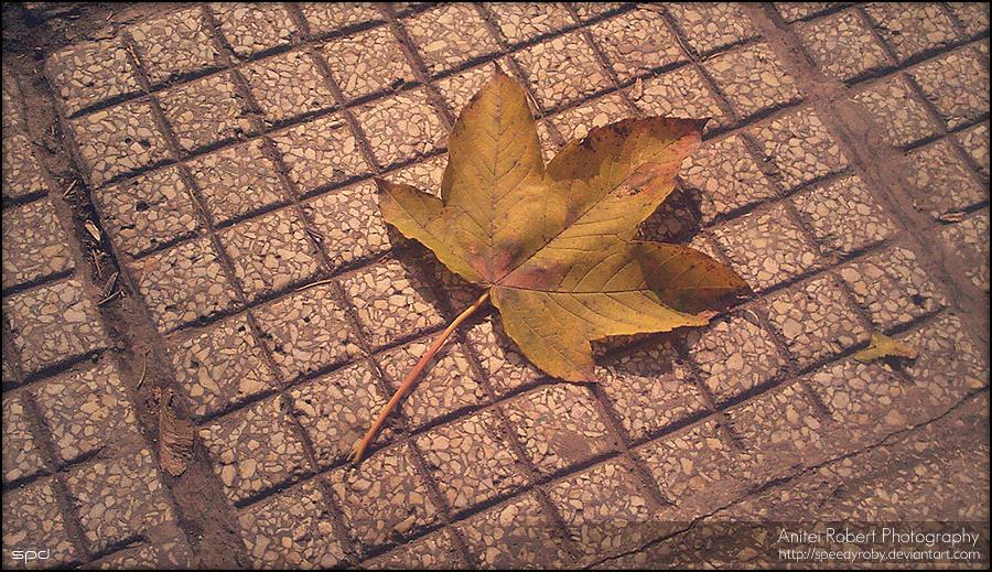 Autumn Leaf by SpEEdyRoBy