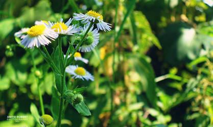 Flowers by SpEEdyRoBy