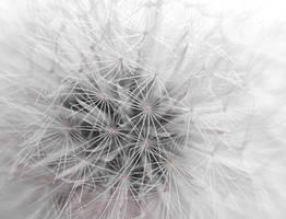 Nature's Whisper by ericthom57