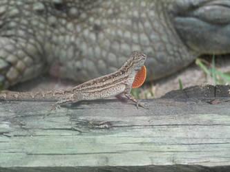 The Hidden Reptile by FreeingMyAngelWings