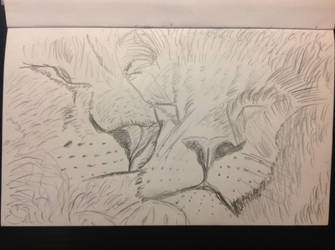 Sleeping Lions by realTIMematrix