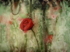 poppy by Sesalina