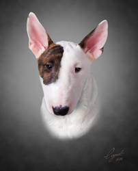 Bull Terrier. Portrait. by LogartRU