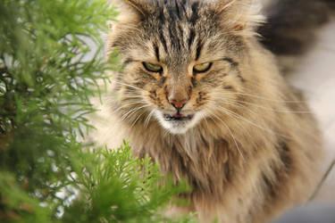 angry? by Kolka12