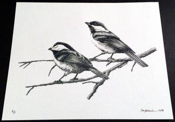 Chickadee 3 by TimBaldwin