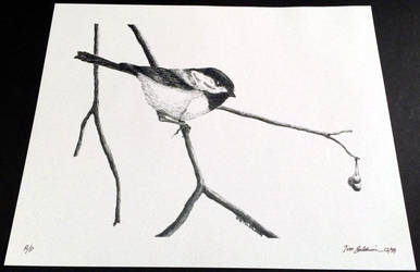 Chickadee 4 by TimBaldwin