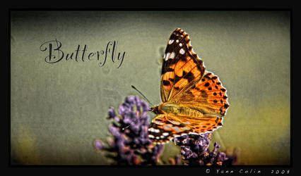 'Butterfly' by Yannoux