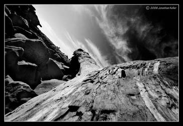 Fallen Log by johnnyevil