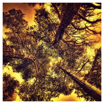 Timber Trinity by wchild