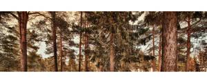 Gallen Woods by wchild