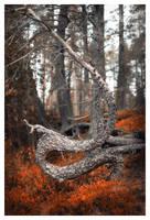 Dragon Pine by wchild