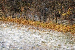 First Snow by wchild