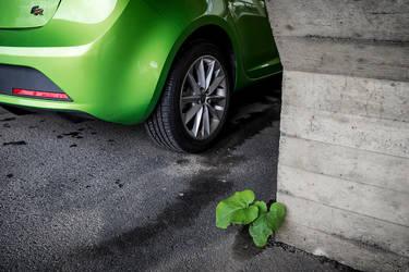 Greens by wchild