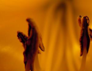 Mrorganicbuddha's Profile Picture