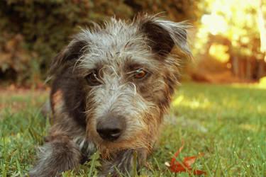 fall pup by IsabelInLalaLand