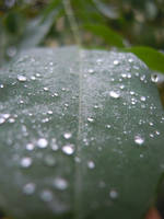 Rain perfection by TantiCake