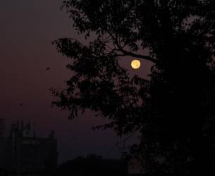 Moonlight by TantiCake