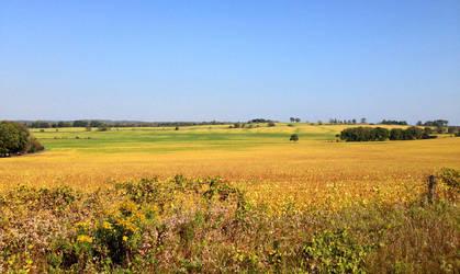 Golden field by Ripplin