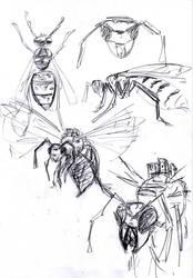 Wasp sketch by NitenNoYume
