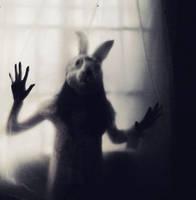 I dream with a rabbit... by evamorgan