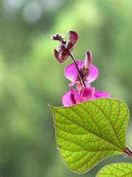 Blooming at Biltmore by huldapp