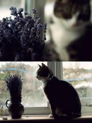 lavender by Hazelaine-G