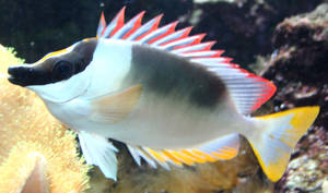 Gage Park Zoo 6 - Fish by Falln-Stock