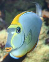 Gage Park Zoo 7 - Fish by Falln-Stock