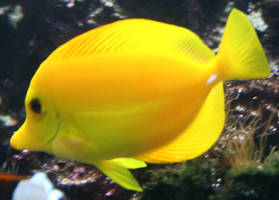 Gage Park Zoo 9 - Fish by Falln-Stock