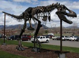 Museum Rockies 141 by Falln-Stock