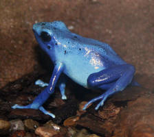 Denver Zoo 80 Frog by Falln-Stock