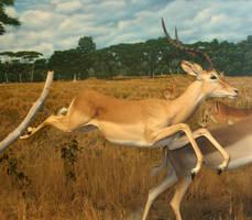 Denver Museum Antelope 391 by Falln-Stock