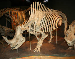 Denver Museum Skeletal 548 by Falln-Stock