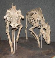Denver Museum Skeletal 559 by Falln-Stock