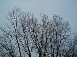 Bare Tree Tops 1 by Falln-Stock