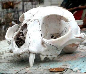 Animal Skull by Falln-Stock