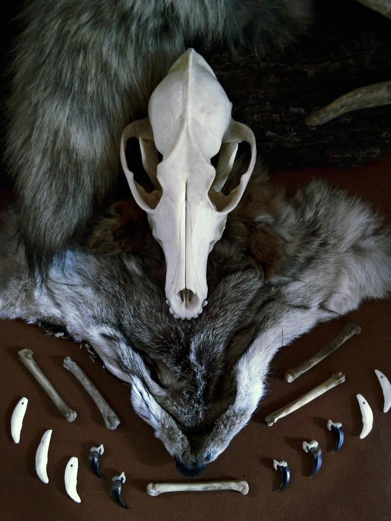 CoyoteSpirit1 by VoceDelBosco