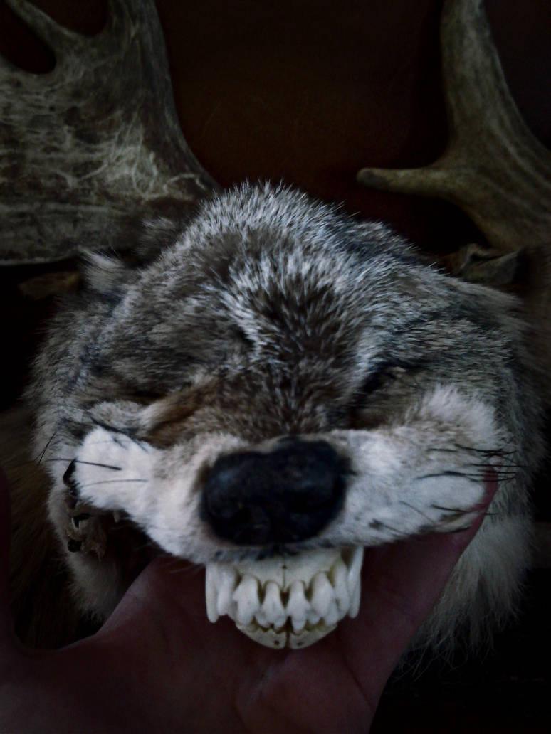 CoyoteSpirit6 by VoceDelBosco